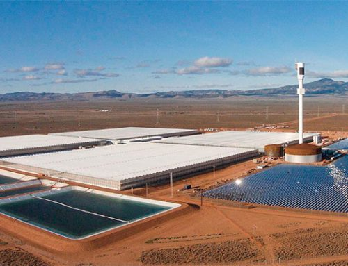 Concentrated Solar Power and use of seawater greenhouses in hydroponics